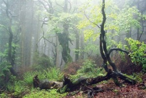 Prales na Javorníkoch
