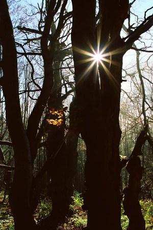 Slnko medzi stromami