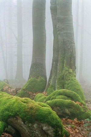 Strom s machom na Javorníkoch