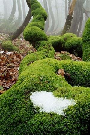 mach so snehom na Javornikoch