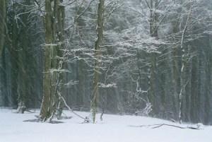 snehova chumelenica na Javornikoch