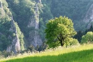strom nad Maninskou