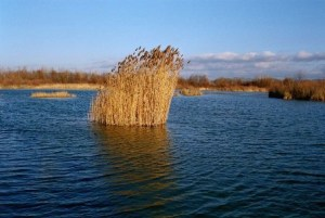 travy vo vode