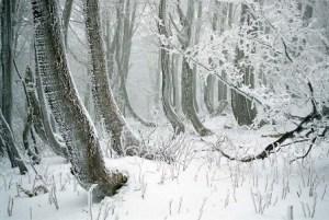 zamrznutý les na Javorníkoch